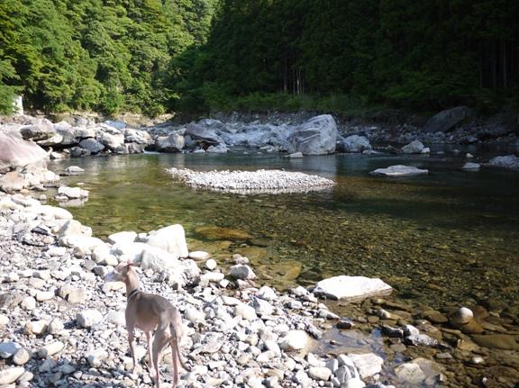 浅いし、流れも穏やかなので、夏は川遊びが出来そう♪