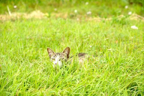 120519-cat.jpg