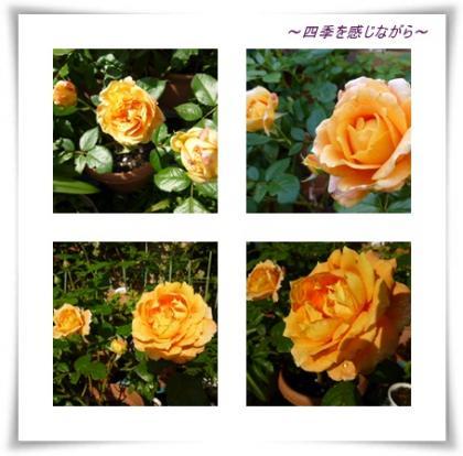 荳・痩_convert_20121023103050
