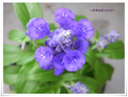 DSCN0117_convert_20120928112336.jpg