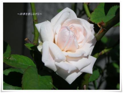 DSCN0150_convert_20120928112742.jpg