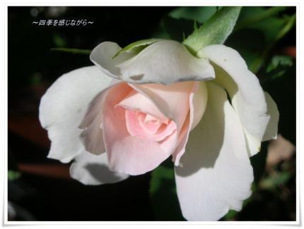 DSCN0155_convert_20120928112901.jpg