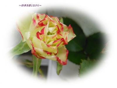DSCN1880_convert_20120426235613.jpg
