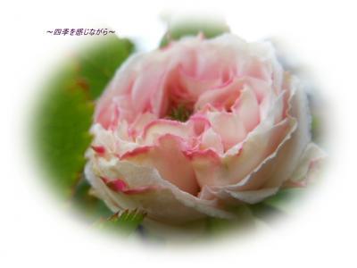 DSCN1885_convert_20120426235726.jpg