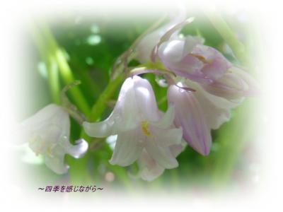 DSCN1914_convert_20120501134646.jpg