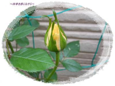 DSCN1938_convert_20120501134943.jpg