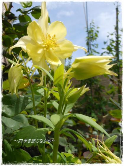 DSCN1975_convert_20120501135441.jpg