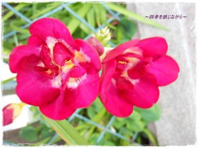 DSCN1979_convert_20120501135534.jpg
