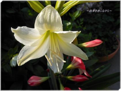 DSCN2059_convert_20120505232659.jpg