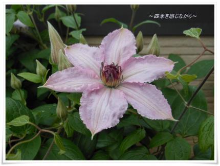 DSCN2079_convert_20120507144220.jpg