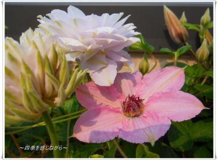 DSCN2114_convert_20120507145121.jpg