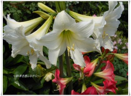 DSCN2142_convert_20120508231556.jpg