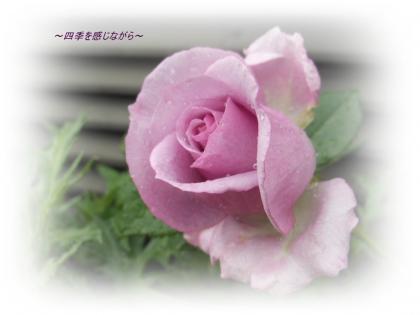 DSCN2155_convert_20120511150324.jpg