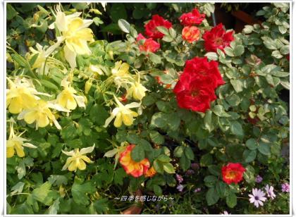 DSCN2159_convert_20120511150543.jpg