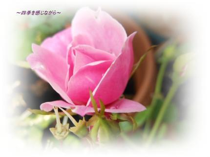 DSCN2171_convert_20120511150909.jpg