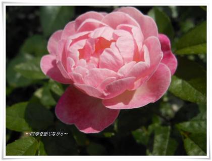 DSCN2200_convert_20120515153019.jpg