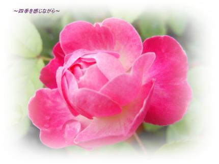 DSCN2293_convert_20120515153550.jpg