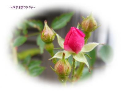 DSCN2294_convert_20120515153613.jpg