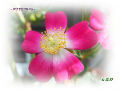 DSCN2314_convert_20120517104529.jpg