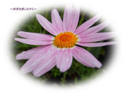 DSCN2319_convert_20120517104806.jpg