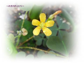 DSCN2320_convert_20120517104832.jpg