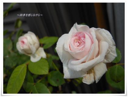 DSCN2324_convert_20120517104924.jpg