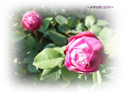 DSCN2342_convert_20120519164010.jpg