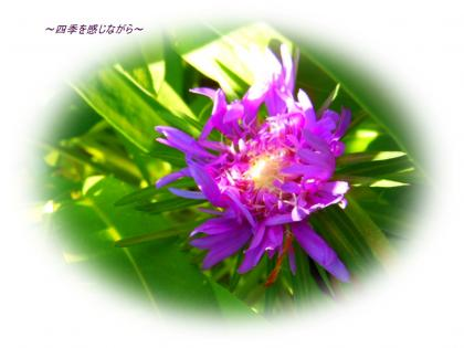 DSCN2343_convert_20120519164040.jpg
