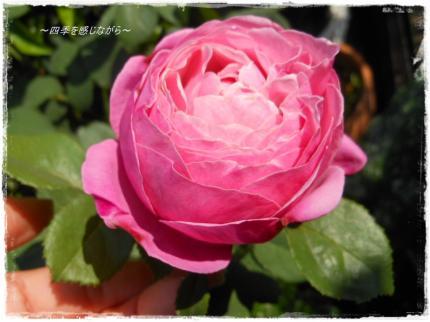 DSCN2355_convert_20120519164400.jpg