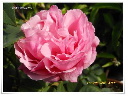 DSCN2368_convert_20120521123813.jpg