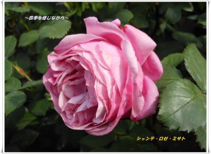 DSCN2369_convert_20120521123842.jpg