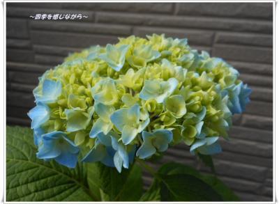 DSCN2372_convert_20120521123911.jpg