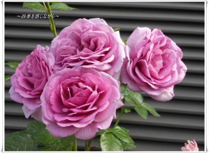 DSCN2373_convert_20120521123941.jpg