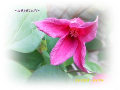 DSCN2379_convert_20120521124040.jpg