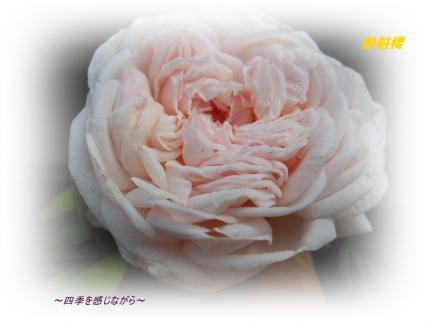 DSCN2384_convert_20120521124143.jpg