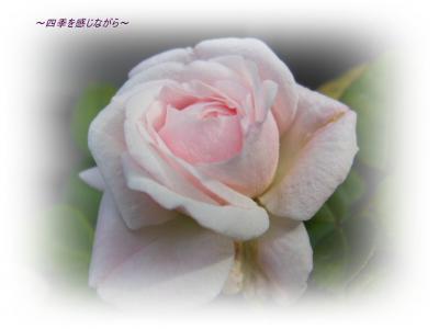 DSCN2385_convert_20120521124212.jpg