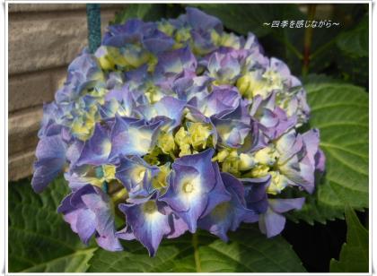DSCN2401_convert_20120524114545.jpg