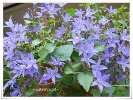 DSCN2427_convert_20120524115019.jpg