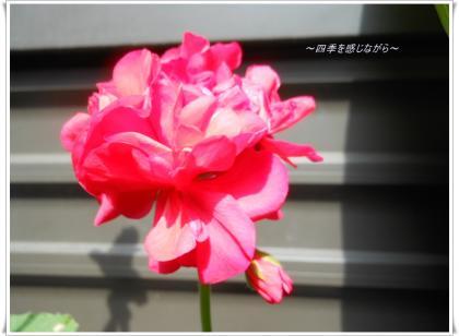 DSCN2431_convert_20120524115204.jpg