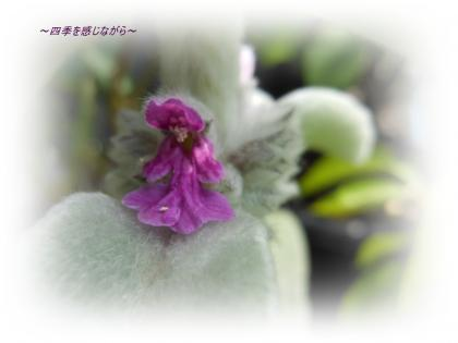 DSCN2433_convert_20120527155959.jpg