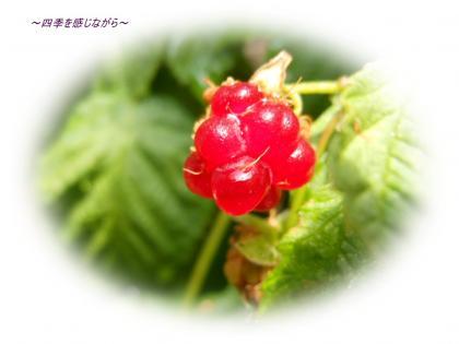 DSCN2440_convert_20120527160208.jpg