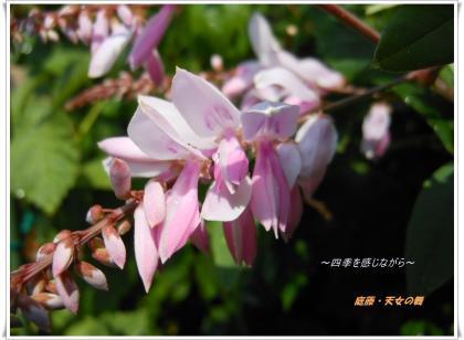DSCN2447_convert_20120527160306.jpg