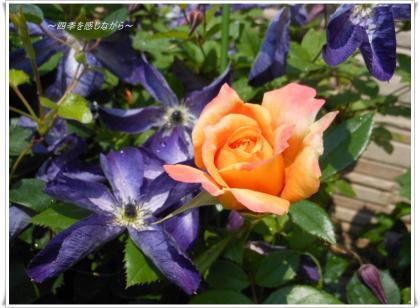 DSCN2448_convert_20120527160333.jpg