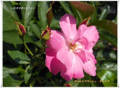 DSCN2449_convert_20120527160358.jpg