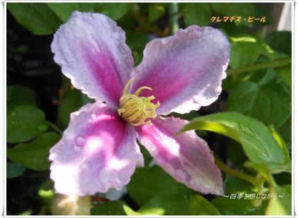 DSCN2450_convert_20120527160424.jpg