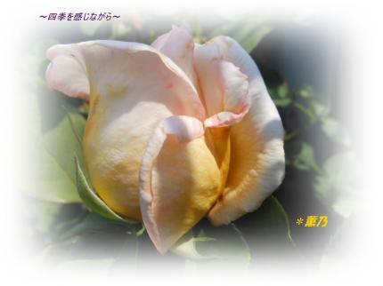 DSCN2453_convert_20120527160544.jpg