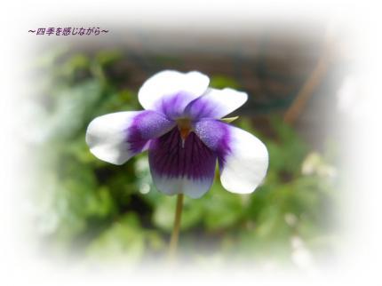 DSCN2458_convert_20120527160729.jpg