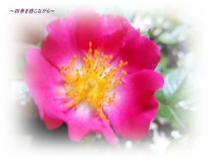 DSCN2487_convert_20120529122703.jpg