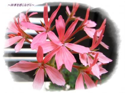 DSCN2508_convert_20120529123141.jpg