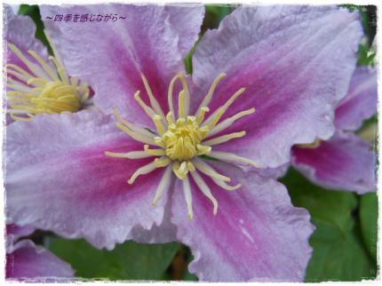 DSCN2536_convert_20120602161811.jpg